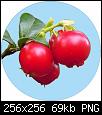 Klicken Sie auf die Grafik für eine größere Ansicht  Name:Badge_Cowberry.png Hits:3 Größe:68,6 KB ID:6000