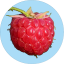 Badge 2019 02 Raspberry.png