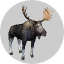 Badge Elk.png