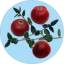 Badge 2018-12 Cranberry.png