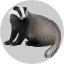 Badge Badger.png