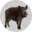 Badge Boar.png