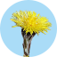 Badge 2018-04 Tussilago.png